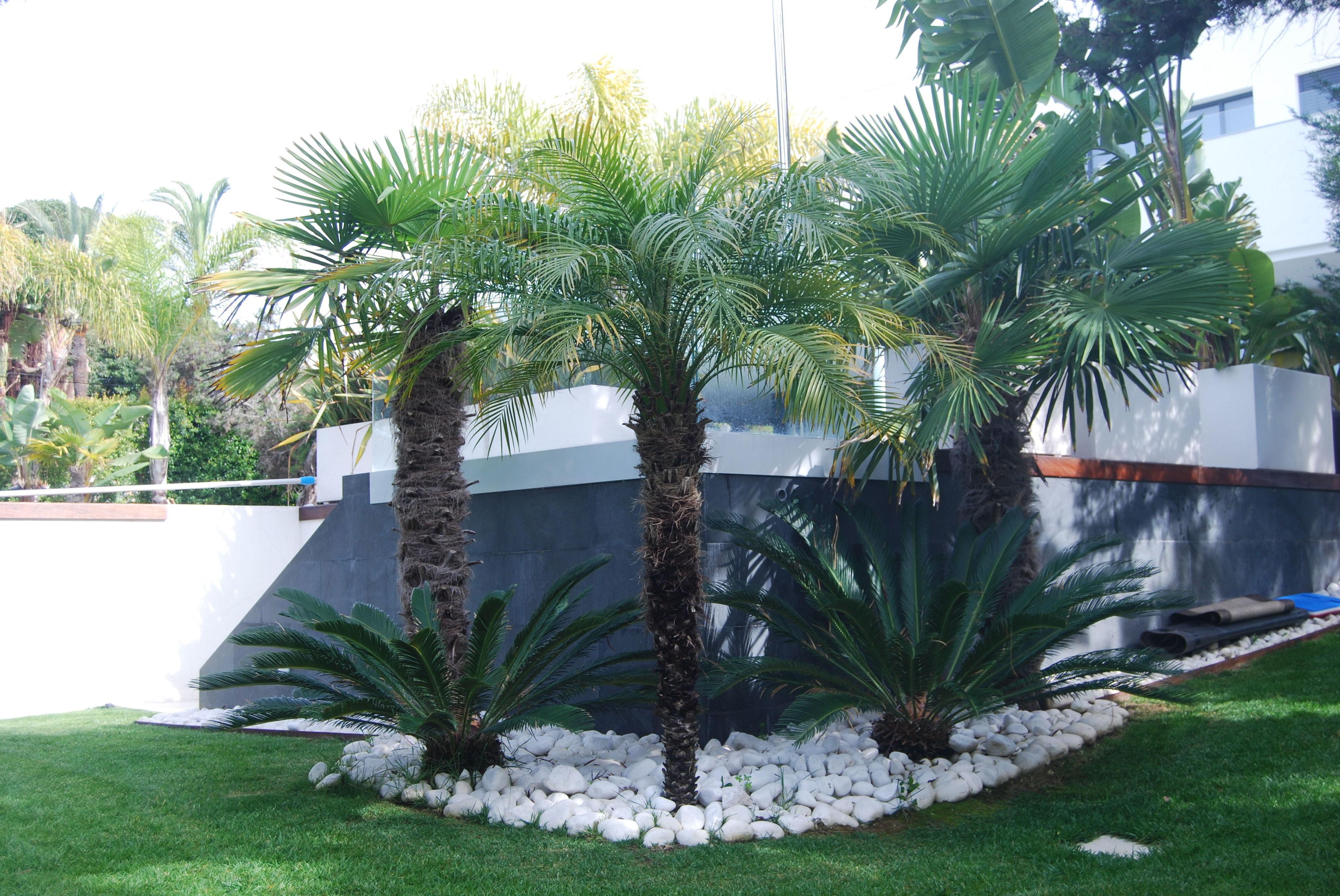 Foto 7 de Diseño y mantenimiento de jardines en San Pedro de Alcántara | Fantastic Gardens