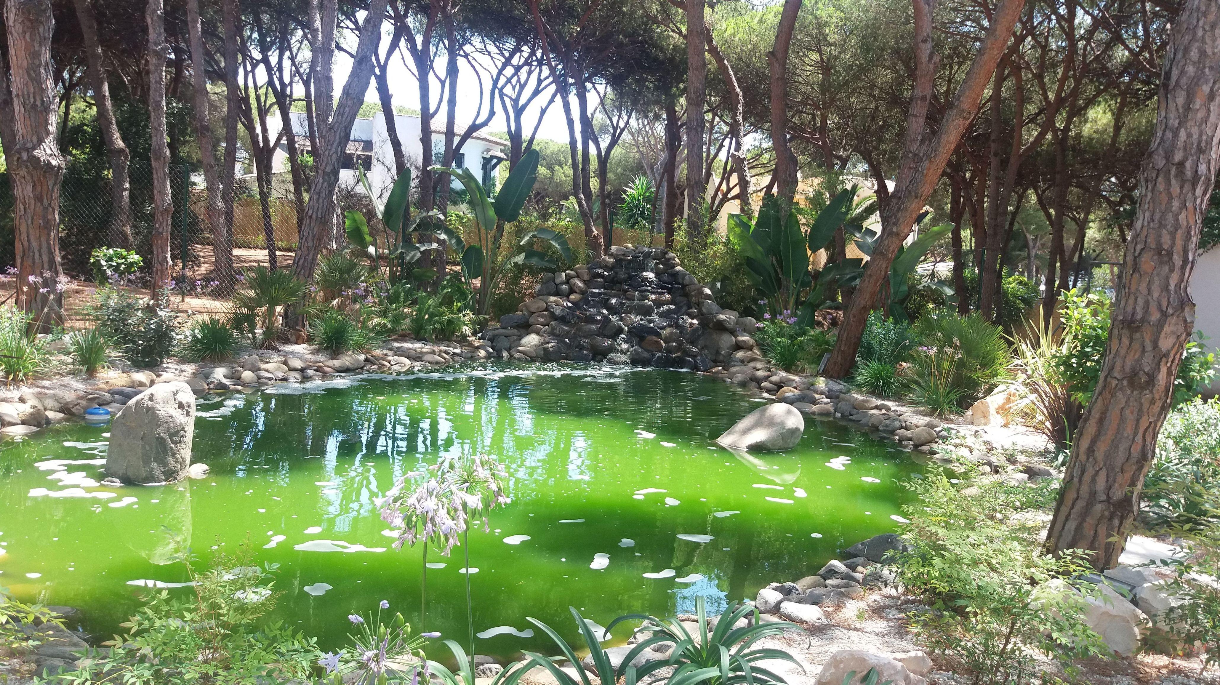 Creación de lago con sus plantas