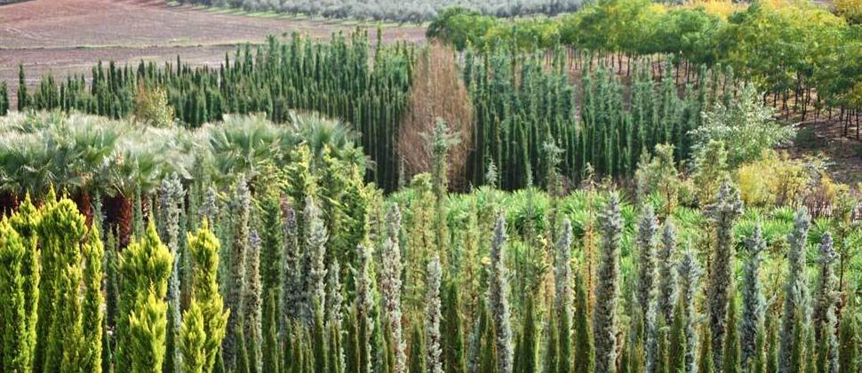 Una amplia variedad de árboles
