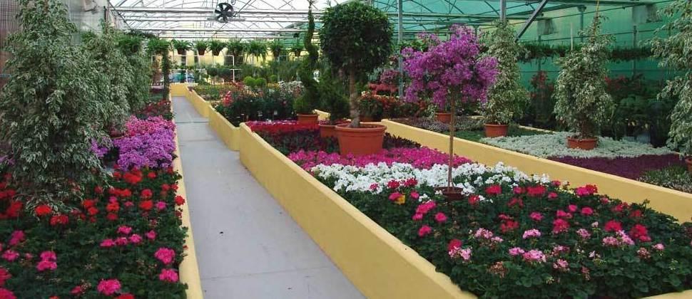 Tenemos una amplia variedad de plantas