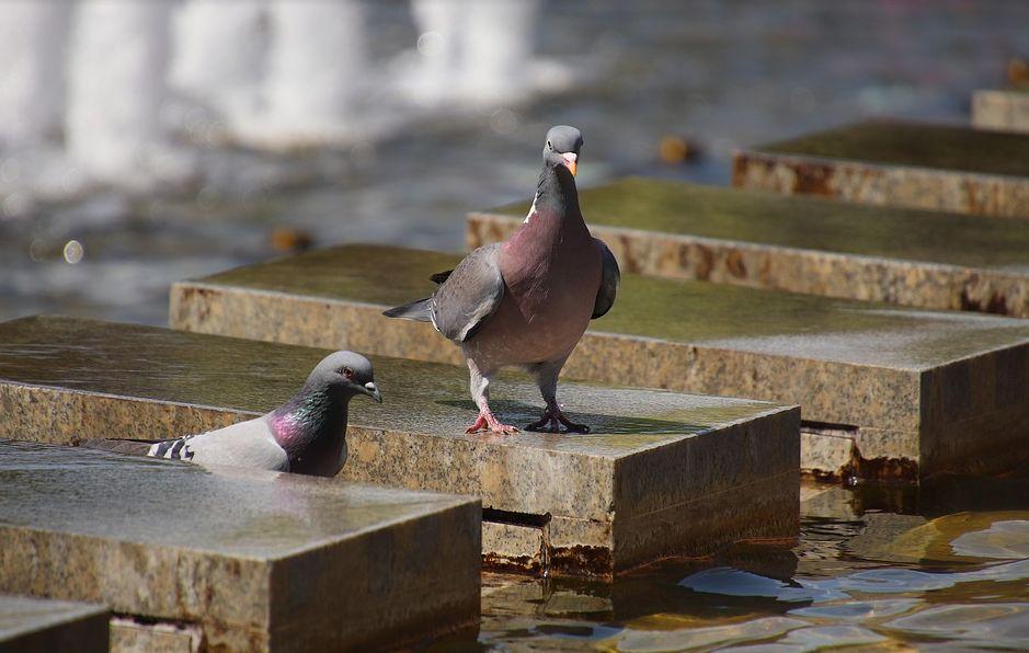 Control de plagas de palomas en Cádiz