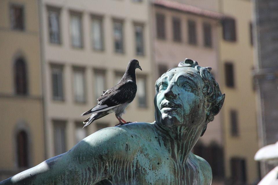 Control de aves: Servicios de Biofauna
