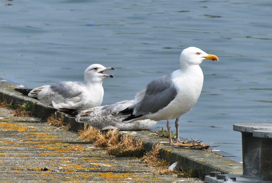 Control de plagas de aves en Cádiz
