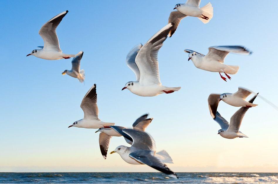 Control de plagas de aves en Málaga