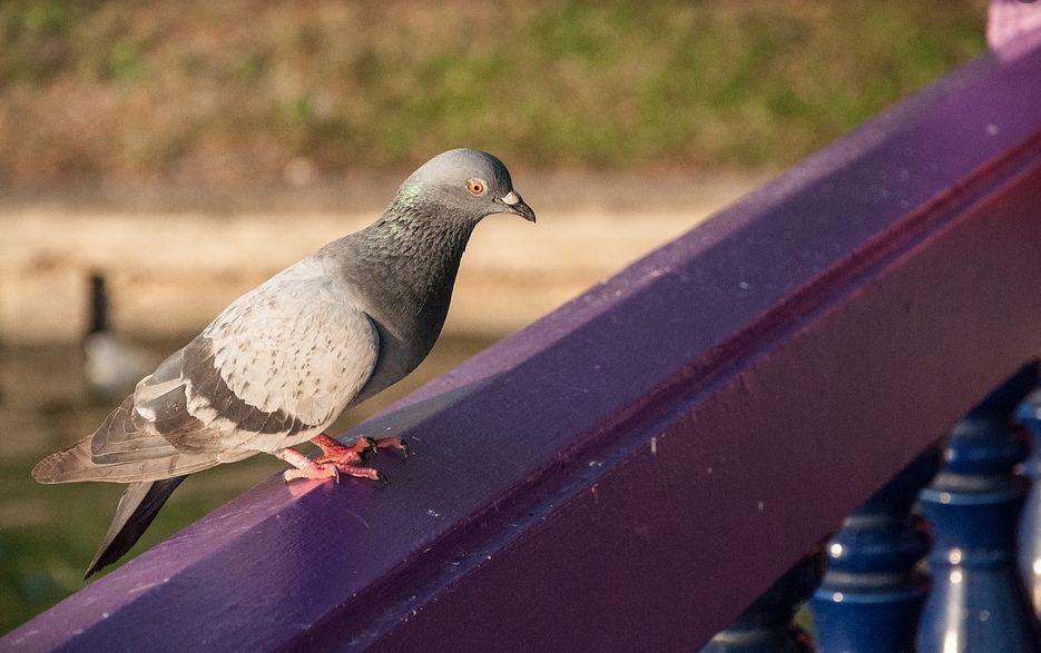 Control de aves en Málaga