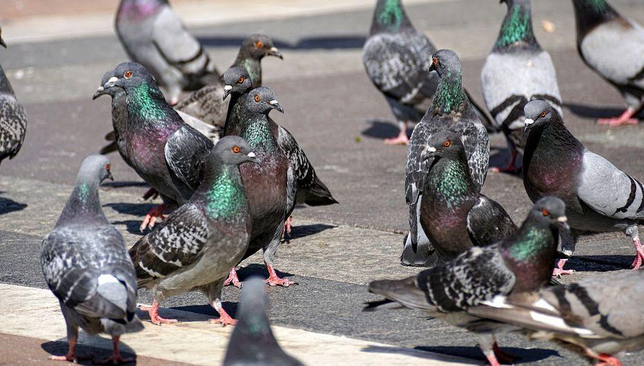 Control de aves en Cádiz
