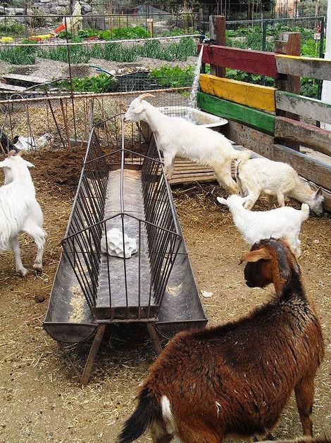Limpieza de granjas: Servicios de Euroneteges I Logística