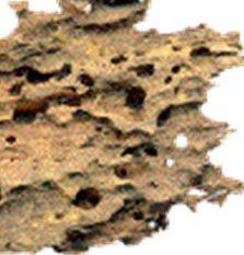 Xilófagos 2