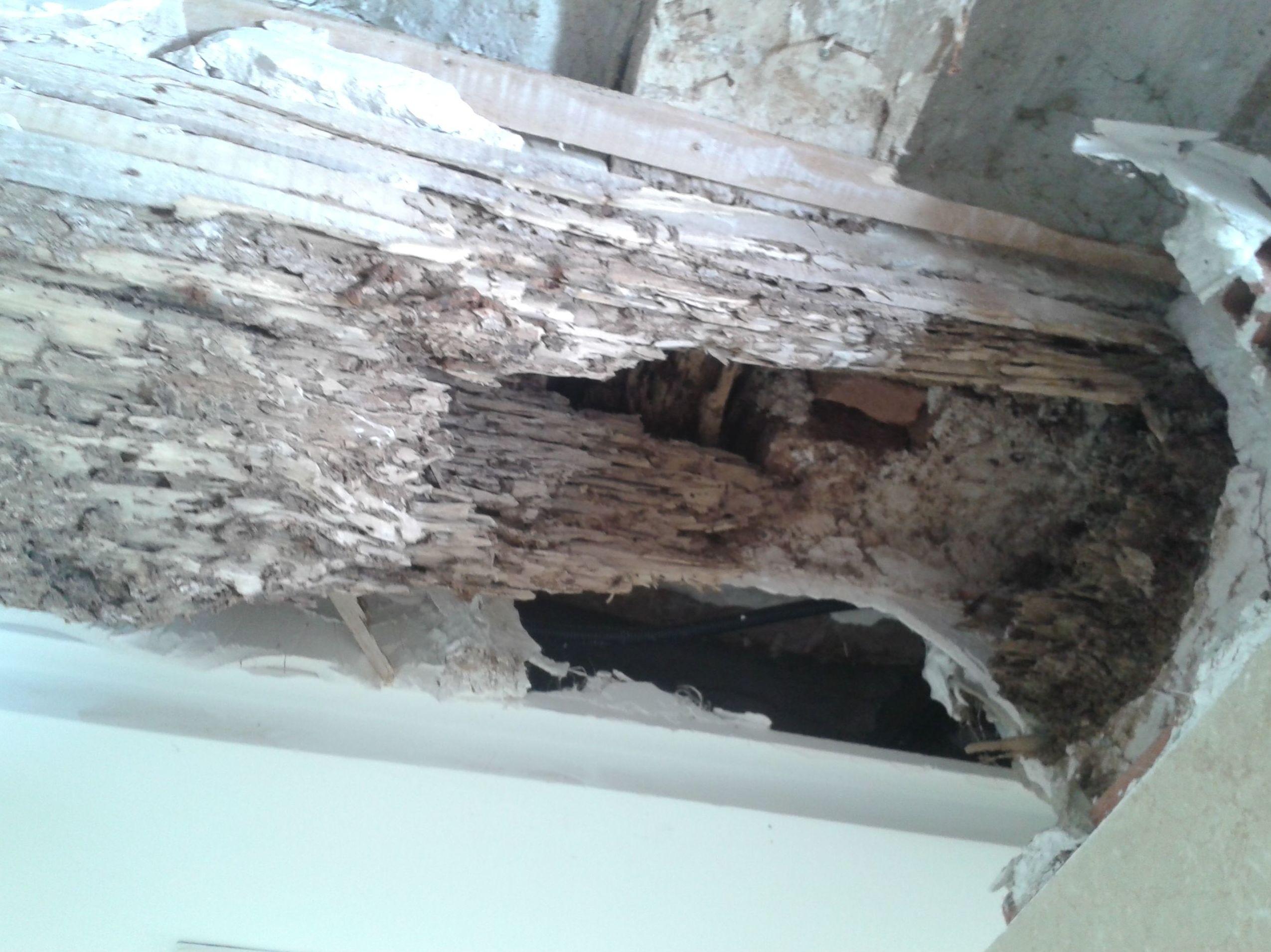 Viga deborada por el ataque de termitas