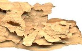 Xilófagos 1