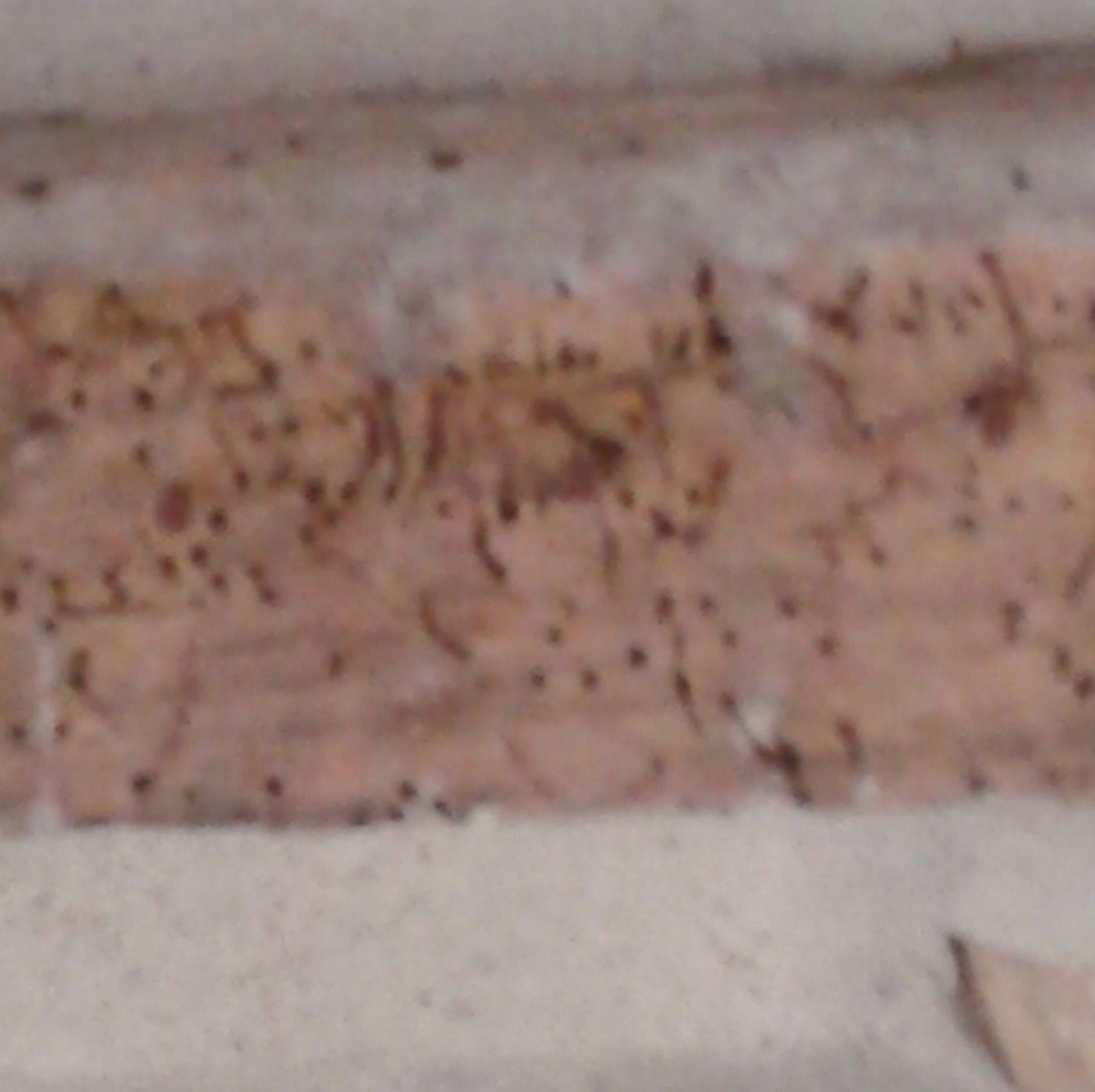 Viga con daño de escarabajo barrenador o carcoma