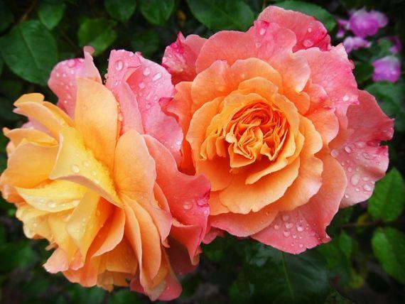 Flores y plantas de temporada: Productos  de Endanea Garden Center