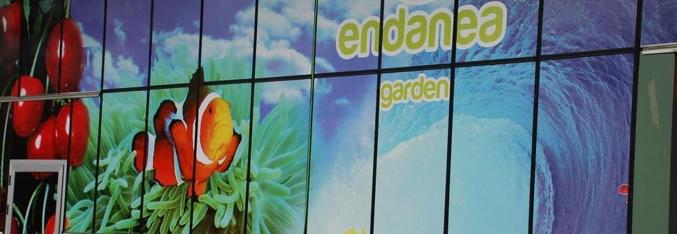 Endanea TV