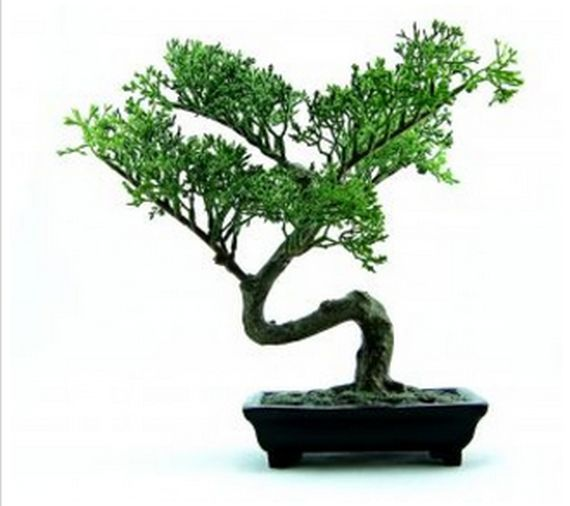 Rincón del Bonsai: Productos  de Endanea Garden Center