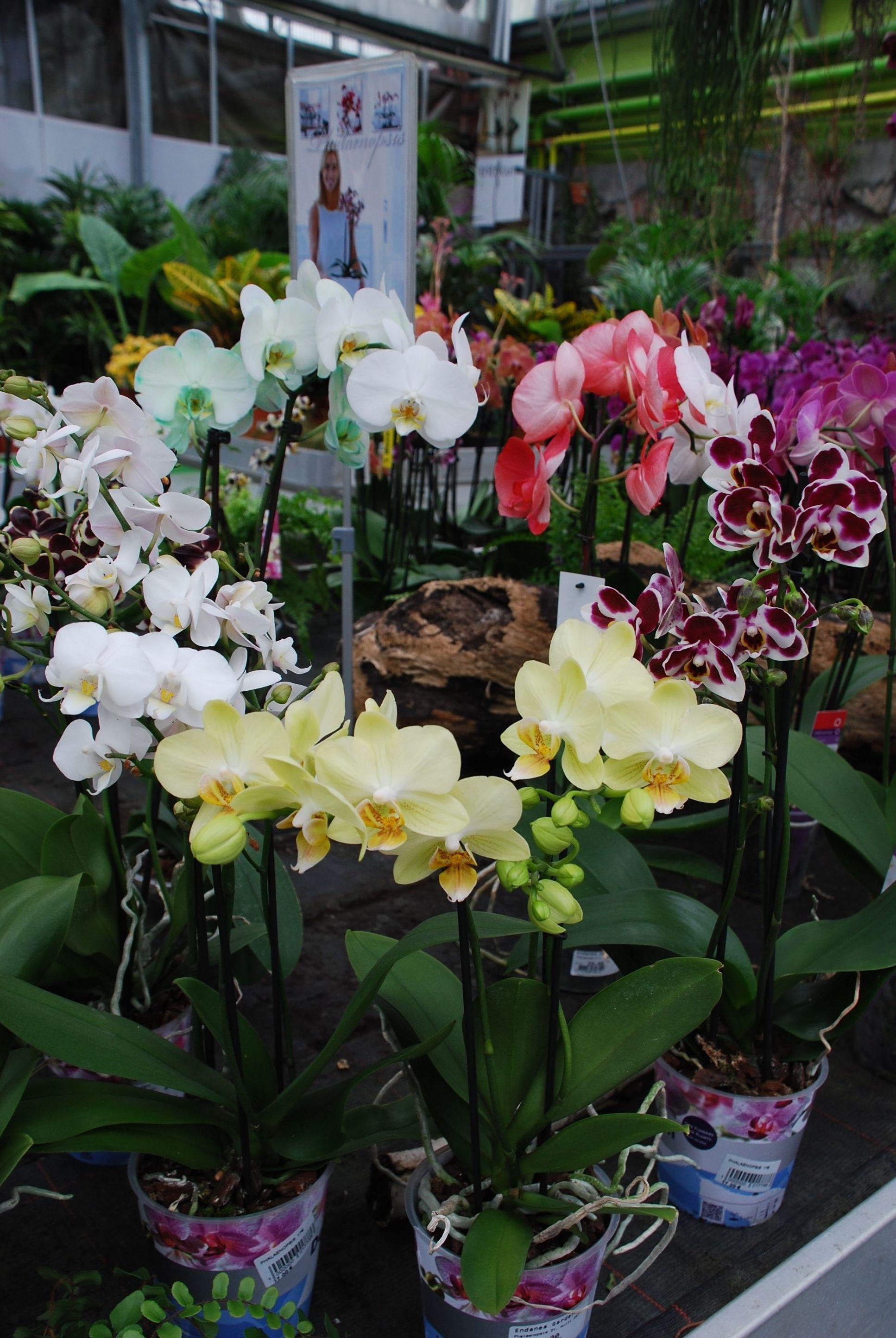 orquideas en distintos colores