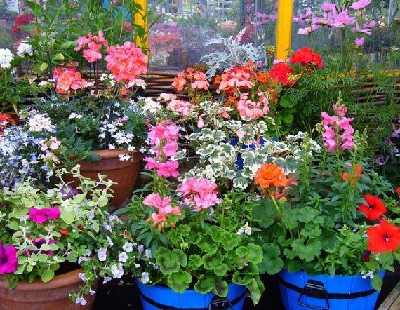 Macetas, tiestos, jardineras y soportes: Productos  de Endanea Garden Center