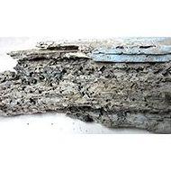 Contra termitas : Nuestros servicios de SBA Control de Plagas