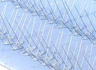 Pinchos metálicos para evitar que se posen y aniden las palomas