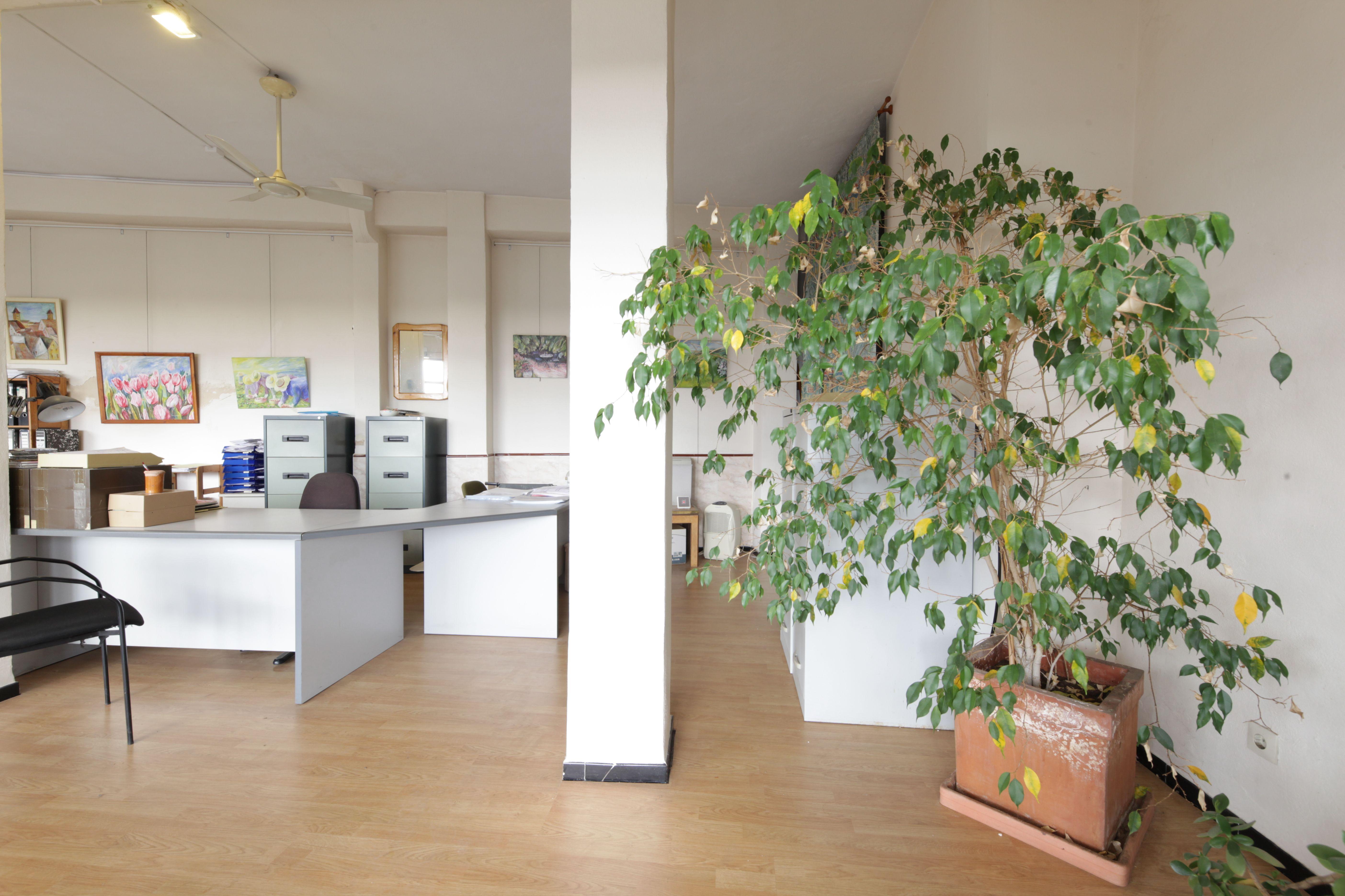 Foto 4 de Inmobiliaria en Llucmajor | Inmobiliaria Llucmajor