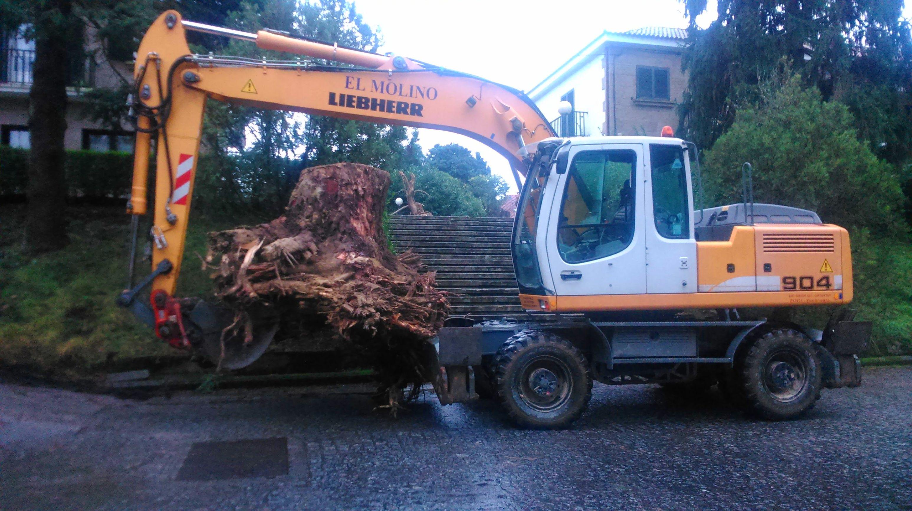 raiz de pino preparada para cargar