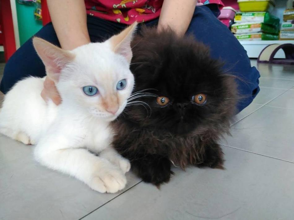 Servicio veterinario para gatos