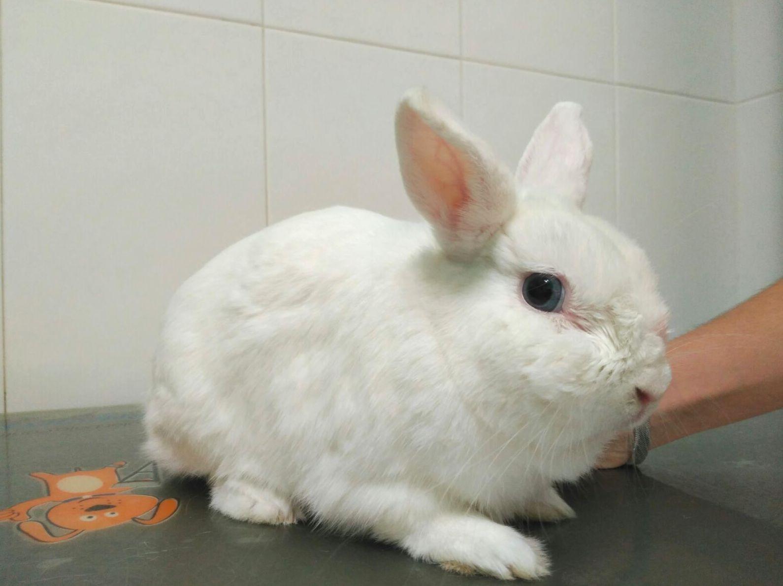 Un conejo muy especial en nuestra clínica veterinaria