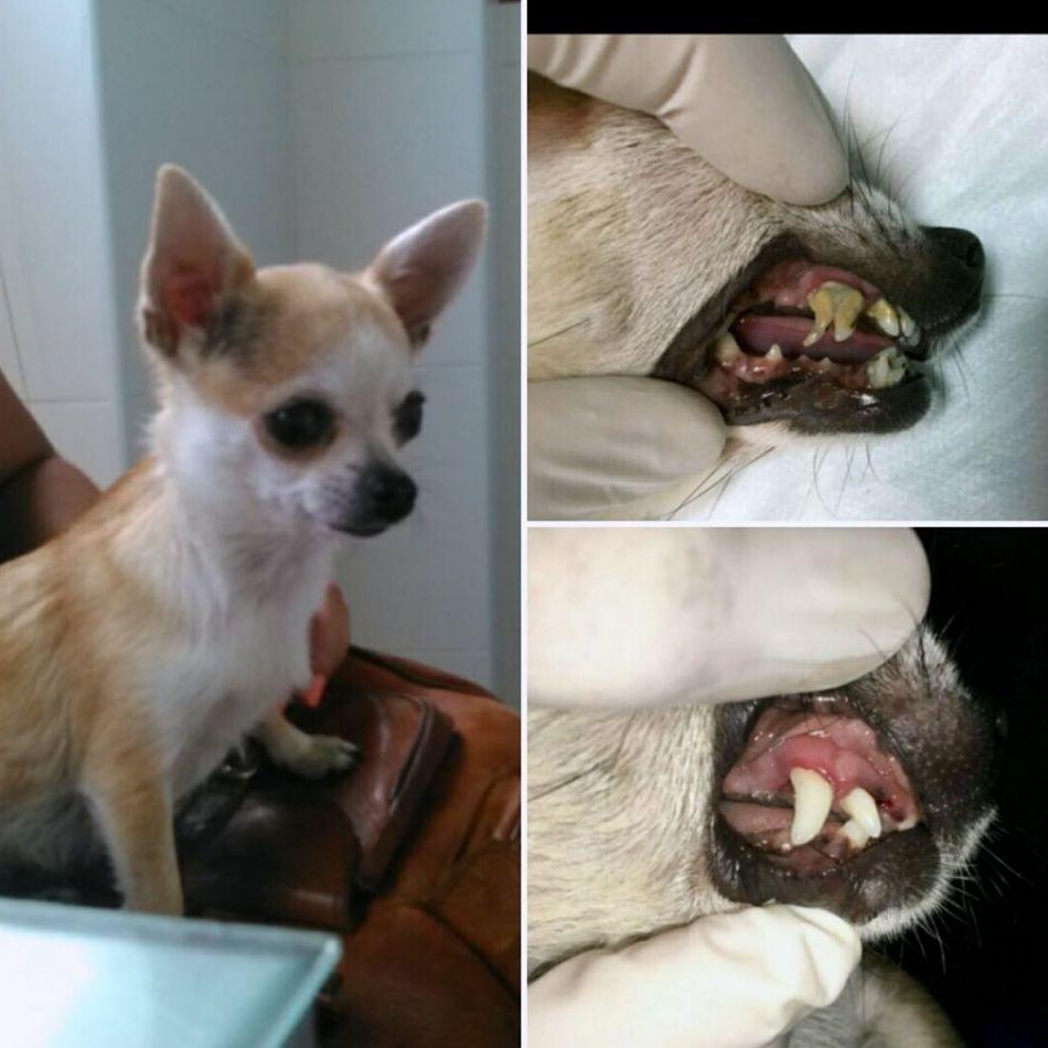 Tratamientos dentales caninos