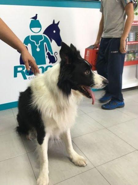 Profesionales veterinarios en Pilas