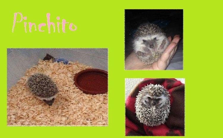 Pinchito, una mascota especial
