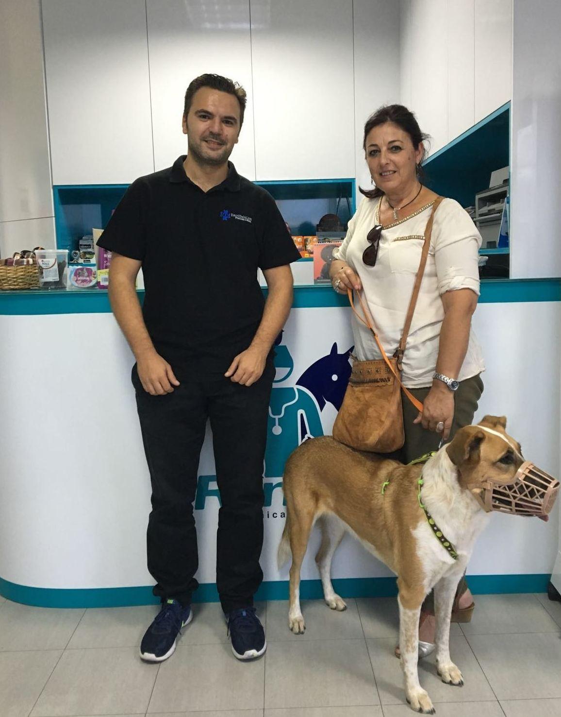 Tratamientos veterinarios profesionales en Pilas