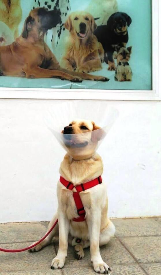 Tratamientos veterinarios en Pilas