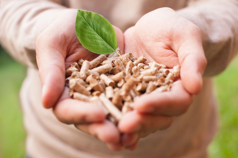 Biomasa en Madrid