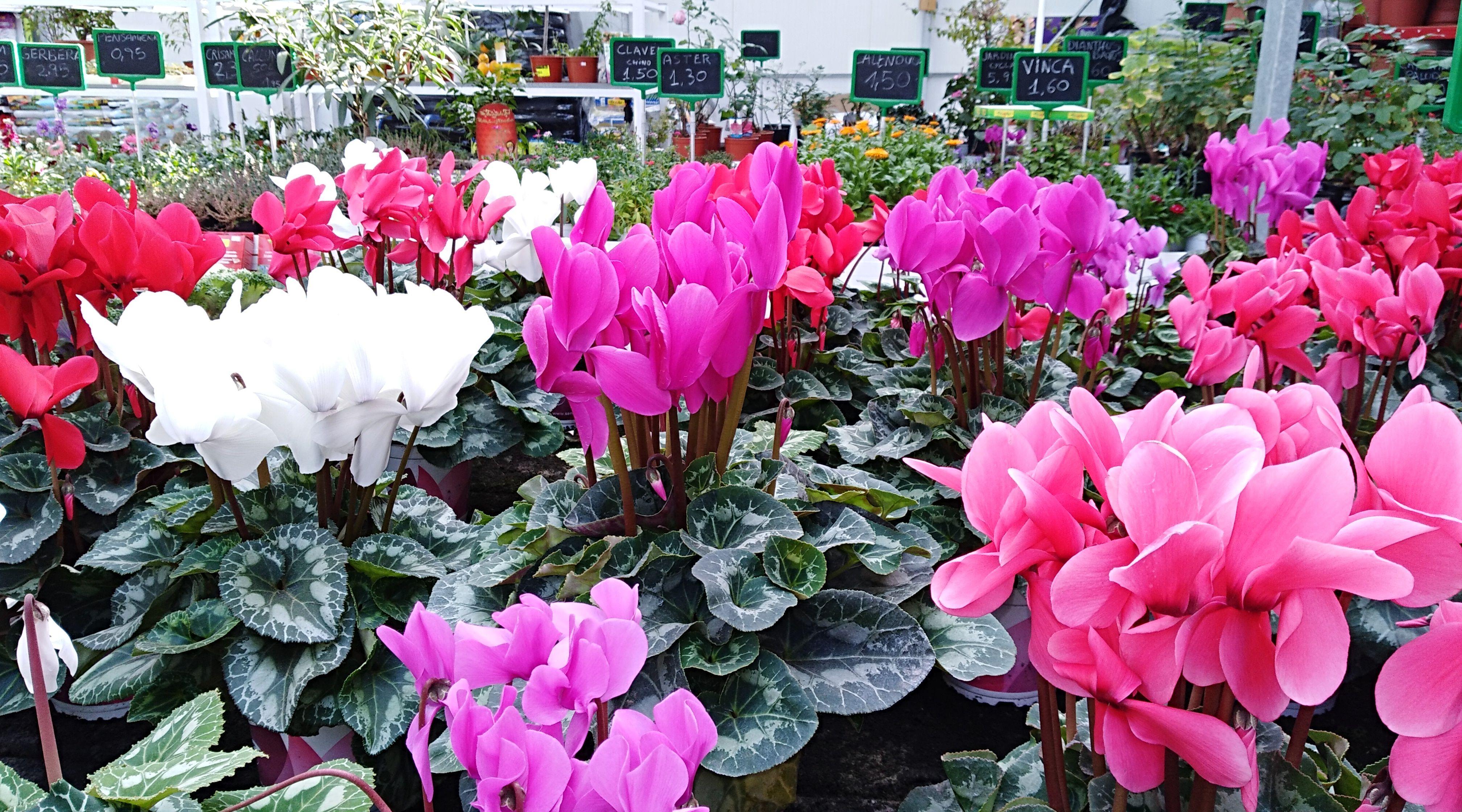 Centro de jardinería en Sangunto