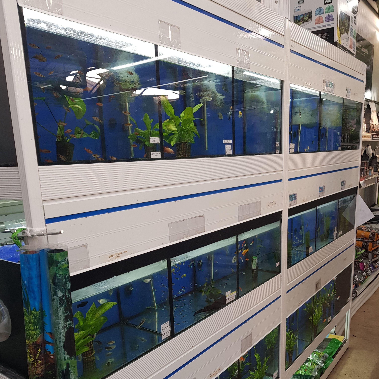 tienda de peces sagunto