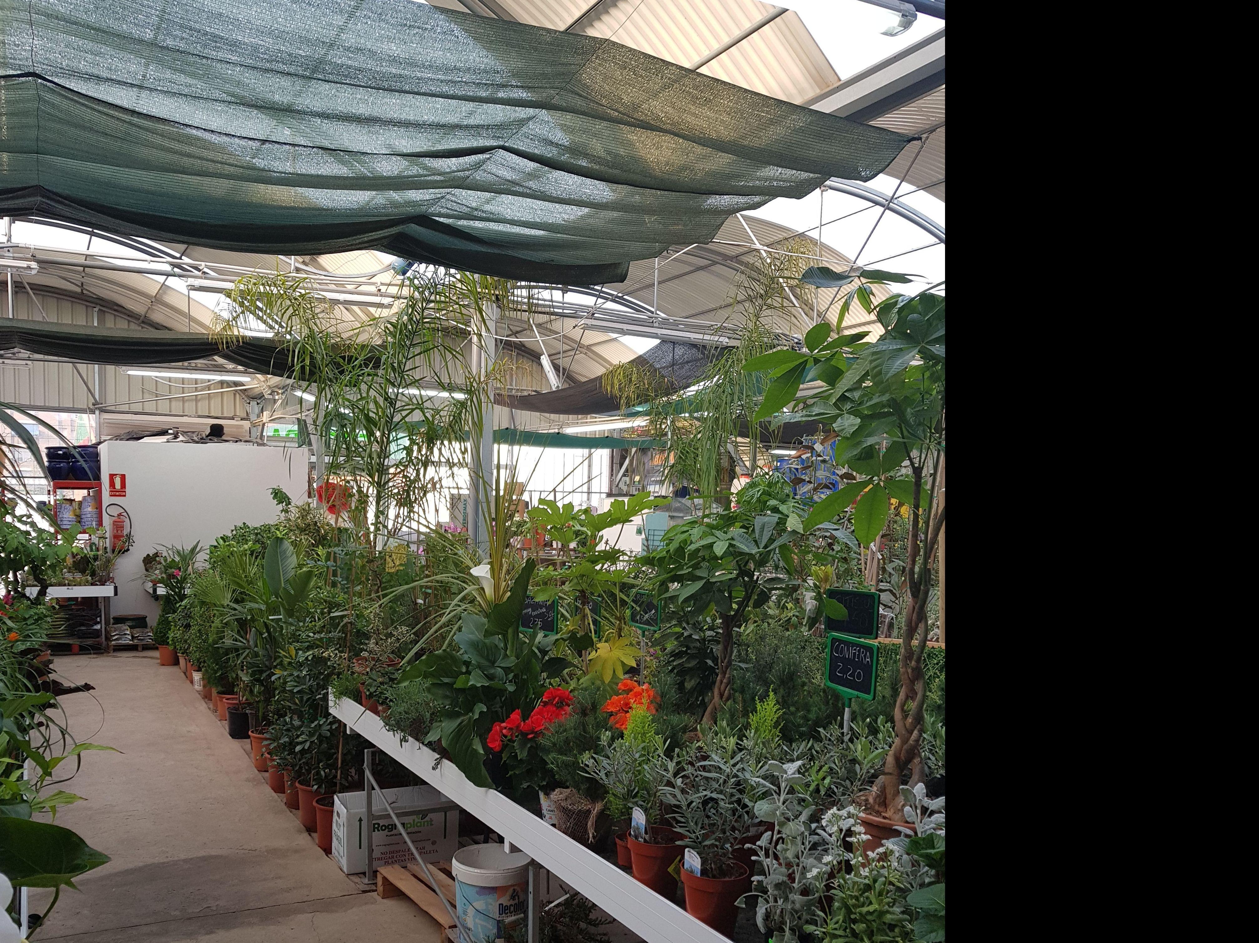 Centro de jardinería Sagunto