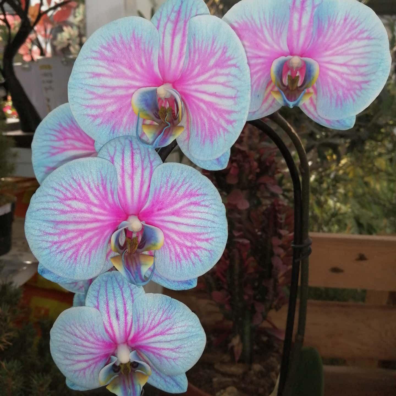 Foto 5 de Centros de jardinería en Port de Sagunt | Trébol Garden