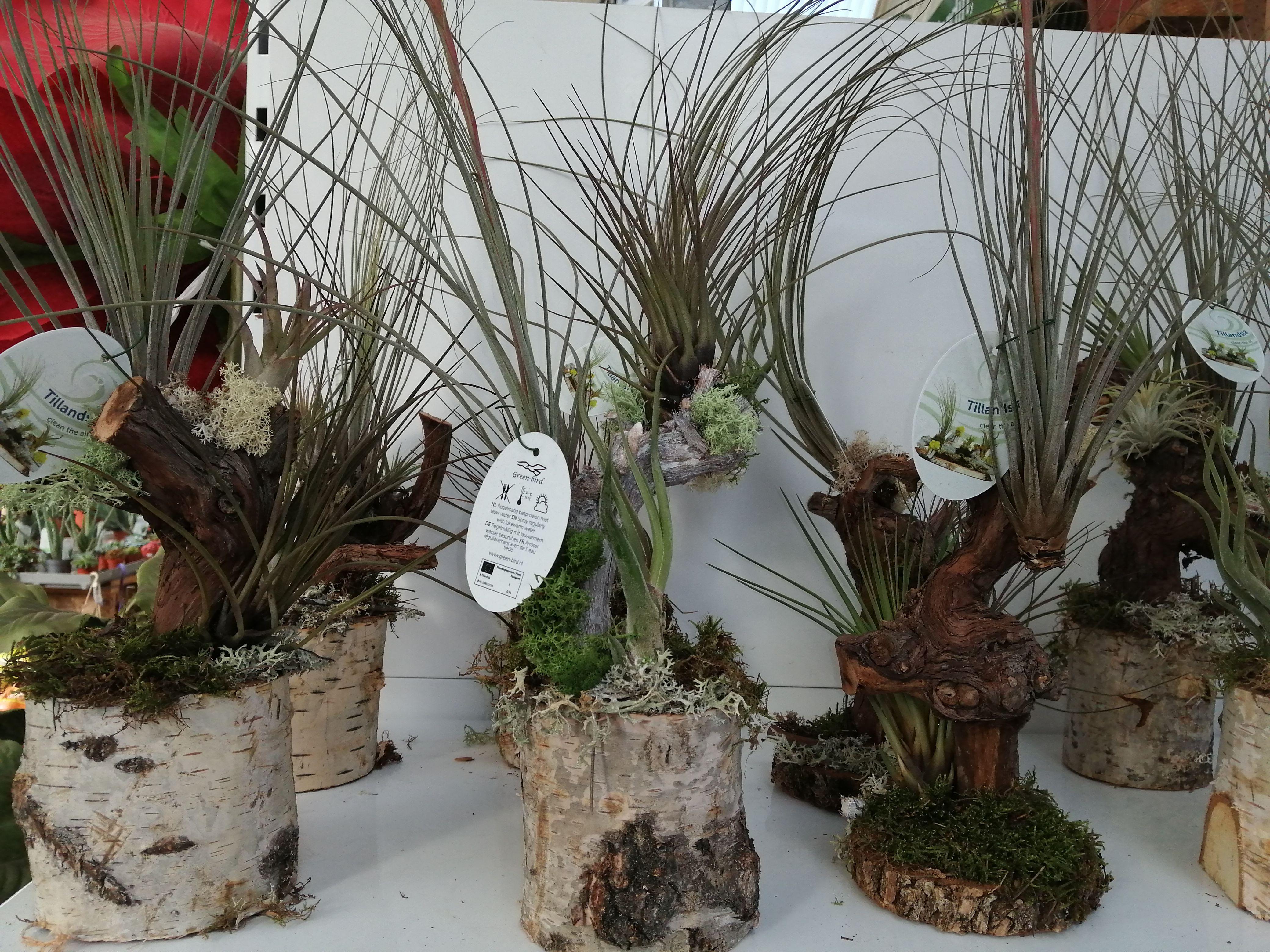 Foto 2 de Centros de jardinería en Port de Sagunt | Trébol Garden