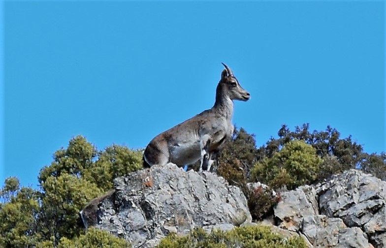 Disfruta de la fauna de Teruel