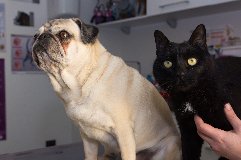 Consulta para todo tipo de mascotas en Rivas