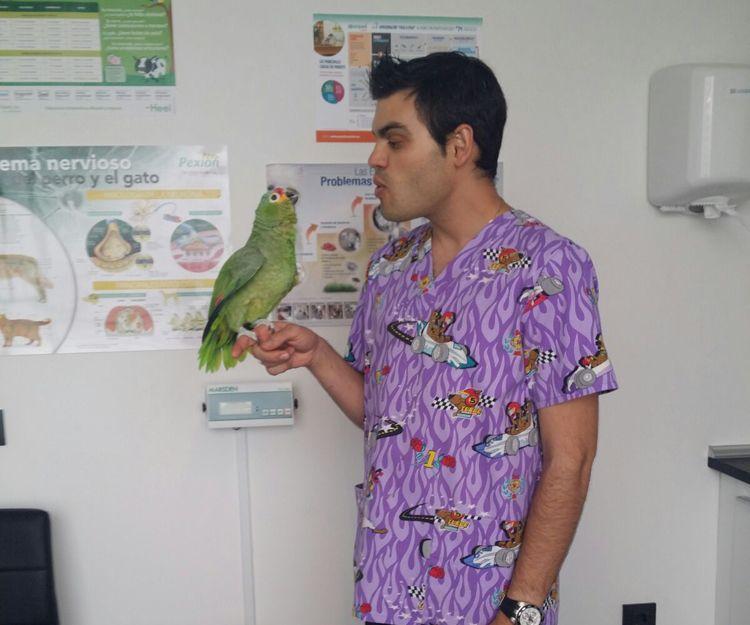 Tratamientos para aves