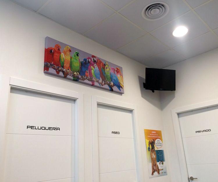 Centro veterinario en Madrid