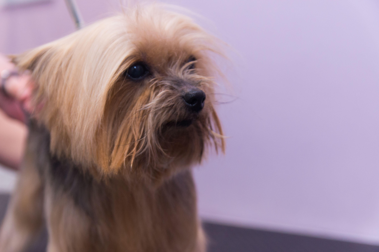Certificados de salud para viajar con tus mascotas en Rivas