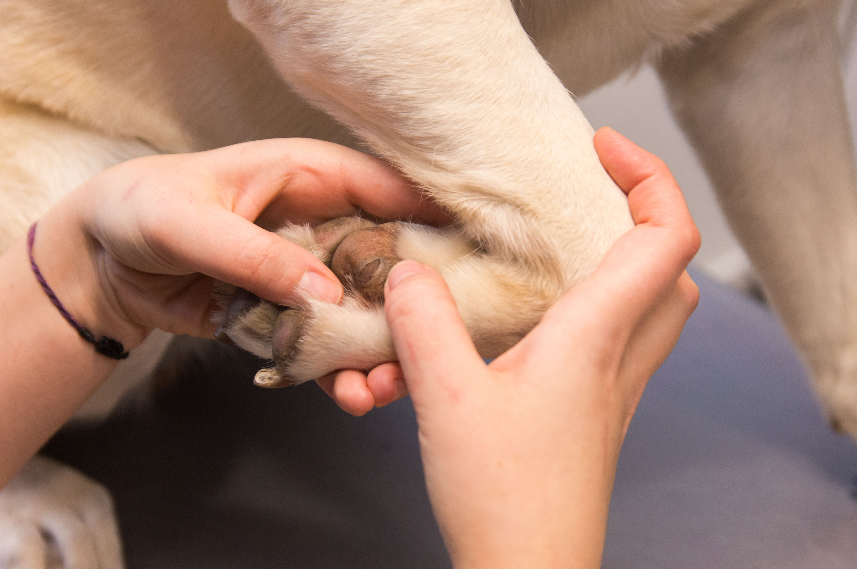 Servicio de traumatología para mascotas en Rivas