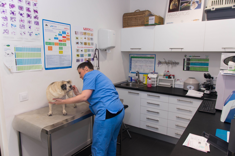 Medicina preventiva para tu mascota en Rivas
