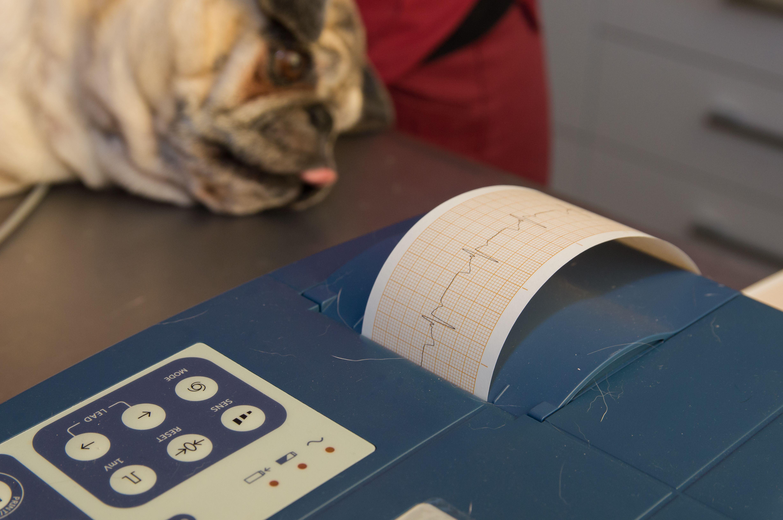 Electro para mascotas en Rivas