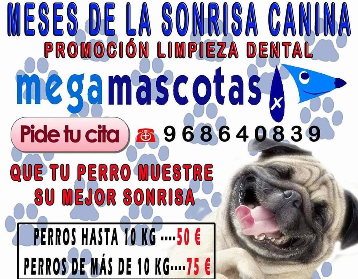 Promoción Limpieza Dental en Murcia