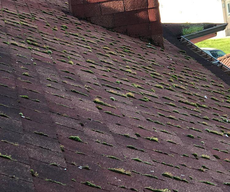 especialistas en reparación de tejados en Gijón
