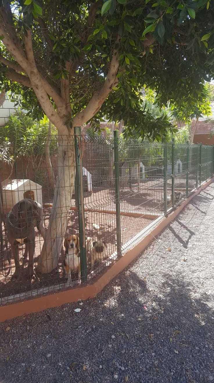 Foto 27 de Tiendas de animales en Las Chafiras | Don Perro