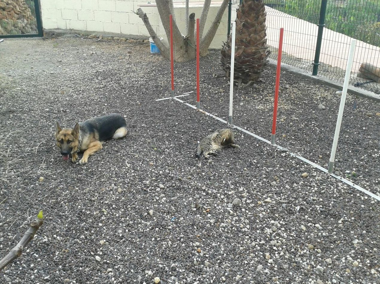 Cursos adiestramientos perros: CATÁLOGO de Don Perro