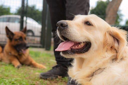 Entrenamiento canino en Tenerife